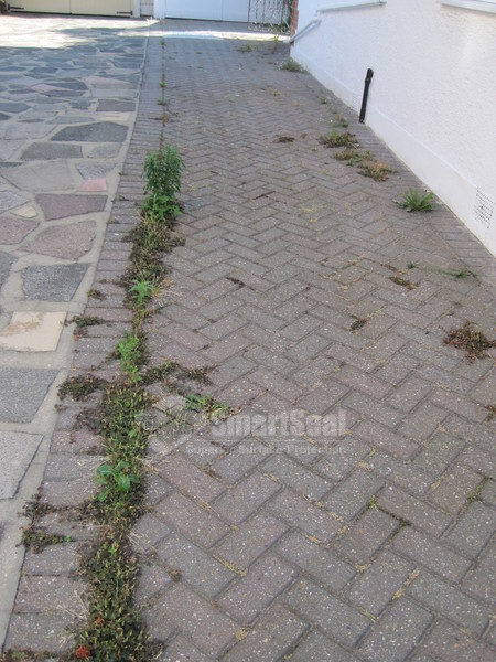 weed growth in block paved driveway
